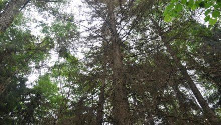 Działania PKE OP w sprawie ochrony lasów