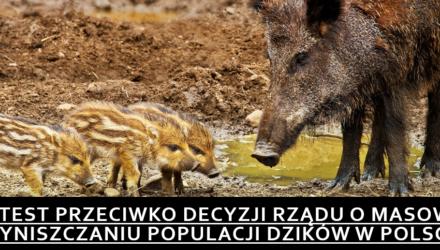 Protest przeciwko decyzji rządu o masowym wyniszczaniu populacji dzików w Polsce